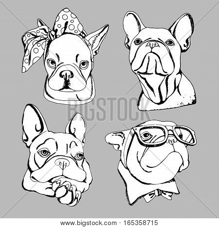 bulldog dog animal french vector illustration pet breed cute drawing puppy