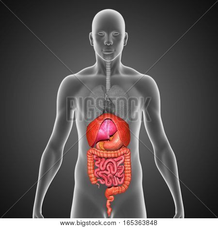 The digestive system is a group of organs working together to convert food into energy and basic nutrients to feed the entire body.