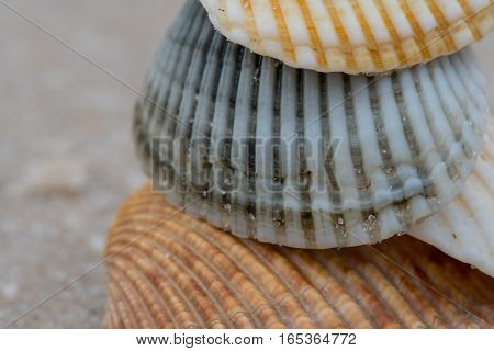 Close Up of Stack of Shells with cropped edges