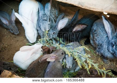 Rabbits on animal farm in rabbit-hutch. On the farm