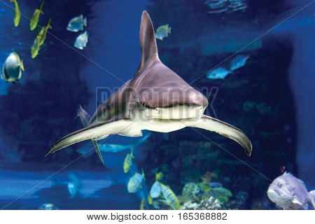 Sharks and small fish swimming in oceanarium