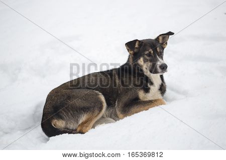 A Stray Dog On The Winter Snow