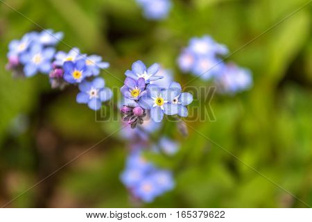 Blue flower in the green higheel mountain