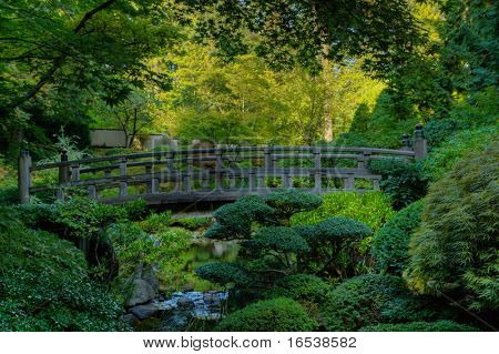 Japanese garden wood bridge surrounded by green foilage in hdr