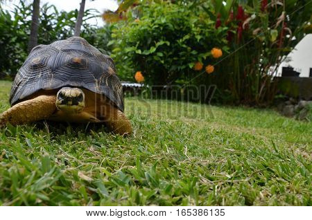 Turtle Tortoise Black Yellow Tropical Exotic Grass Flower