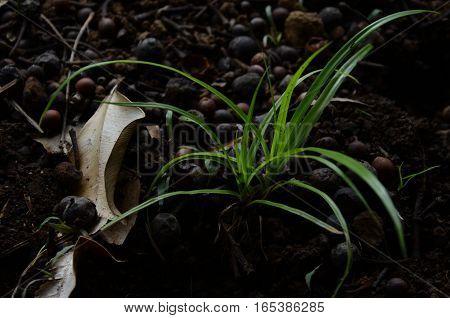Plant Grass Little Dark Green Alone Earth soil environment