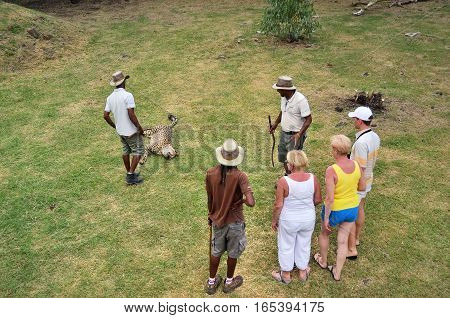 Casela park Mauritius - Apr 30 2013: Tourists look at an wild cheetah during safari in Casela park one from popular wildlife attraction on island