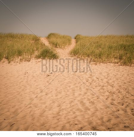 Beach and grass in prince edward island