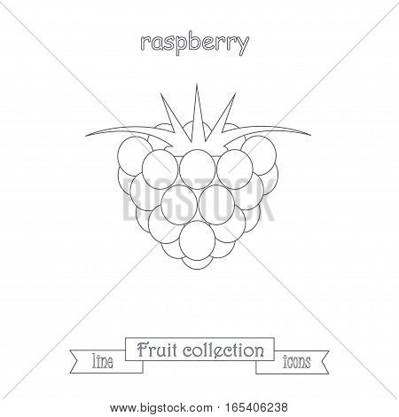 Line raspberry icon, fruit icon collection stock vector illustration