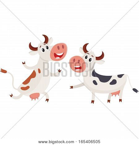 Two spotted Dutch cows talk and dancing, running, cartoon vector illustration isolated on white background. Funny cow characters for dairy farm product design