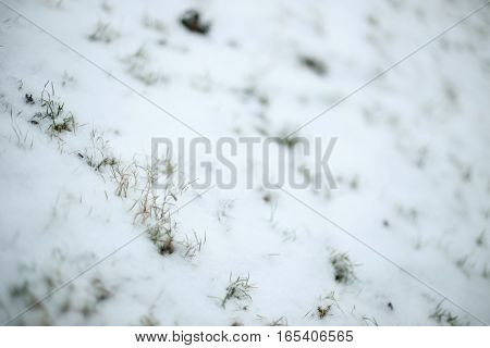 Grass At Winter Time