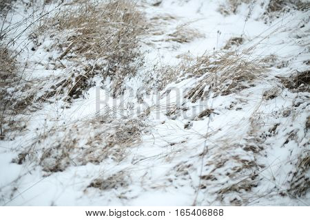 Dried Grass At Winter