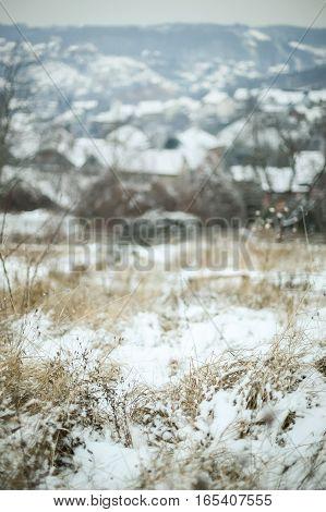 Snowy Dry Grass
