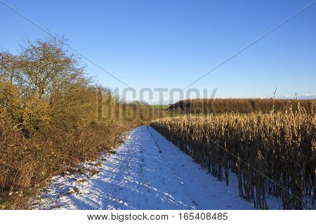 Snow Covered Bridleway