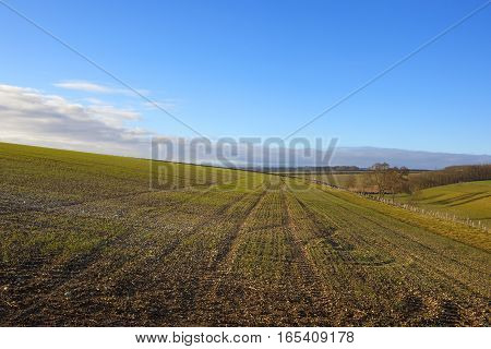 Hillside Wheat Field