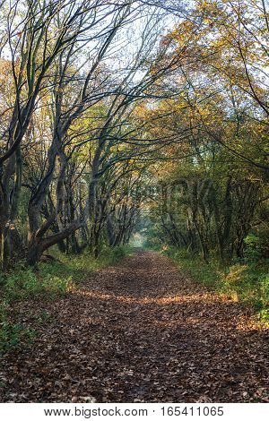 Dreamy forest path inviting you on a magical journey through the woods