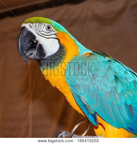 large  tropical exotic parrot,  background with bird