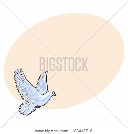 Free flying white dove, sketch style vector illustration isolated on background with place for text. Realistic hand drawing of white dove, pigeon flapping wings, symbol of love, romance and innocence