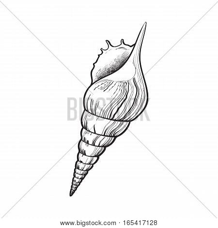 spiral conch sea shell, sketch style vector illustration isolated on white background. Realistic hand drawing of saltwater conch, sea snail shell