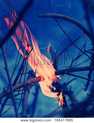 fire on the dry branches of a tree in the forest