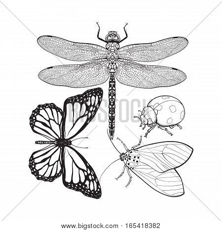 Set of insects like dragonfly, butterfly, ladybird and moth, sketch style vector illustration isolated on white background. realistic hand drawing of dragonfly, butterfly, ladybug and moth