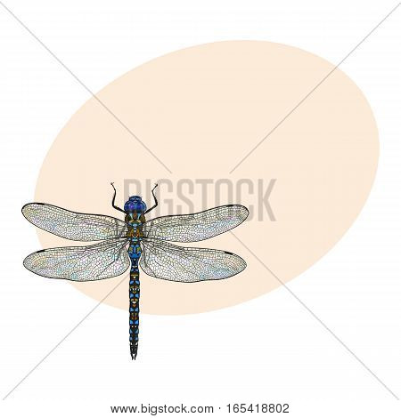 Top view of blue dragonfly with transparent wings, sketch illustration isolated on background with place for text. color Realistic hand drawing of dragonfly insect on white background