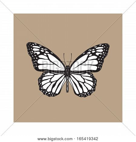 Top view of beautiful monarch butterfly, sketch illustration isolated on brown background. black and white Realistic hand drawing of monarch butterfly on white background