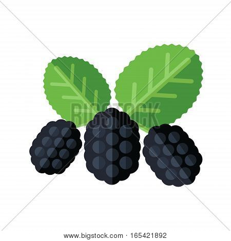 Mulberry Berries And Leaves Vector Illustration. Superfood Morus Or Moraceae Icon. Healthy Detox Nat