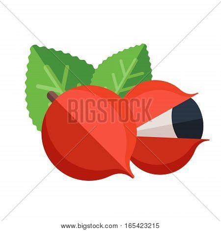 Guarana Fruit And Leaves Vector Illustration. Superfood Paullinia Cupana Icon. Healthy Detox Natural