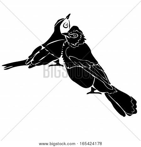 Two siluettes of birds in monochrome isolated on white