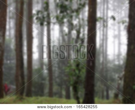Blurred misty pine forest background,Blurred tree background,Blurred green forest background