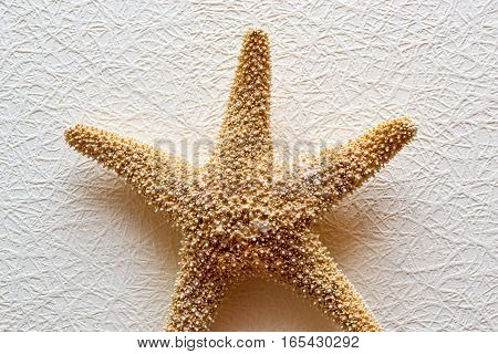 Starfish on white textured wallcovering. Dried five-pointed sea star - backdrop for aquarium and interior. Exotic inhabitant of sea and ocean