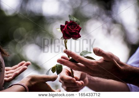 a guy giving a rose to a girl as sign of love