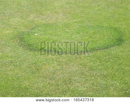 Fungal disease on a grass bowling green showing the characteristic circular ring.