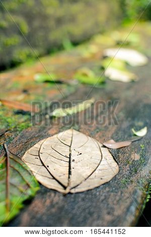 wet gray leaf on a wooden bench