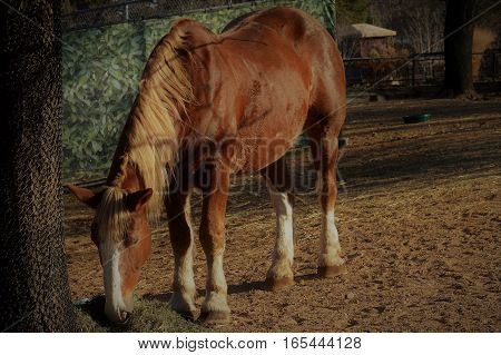 A close up of a brown horse