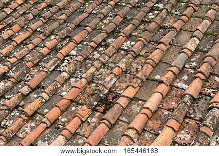 Close up detail of terracotta roof tiles with moss and lichen on a roof in Florence Italy