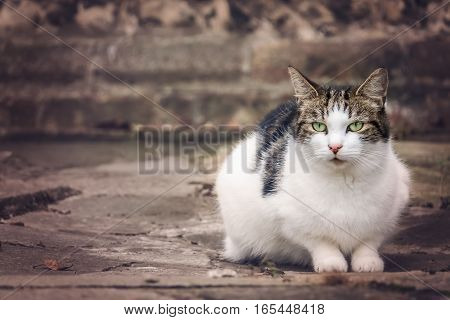 Portrait of a cute furry cat sitting on the ground