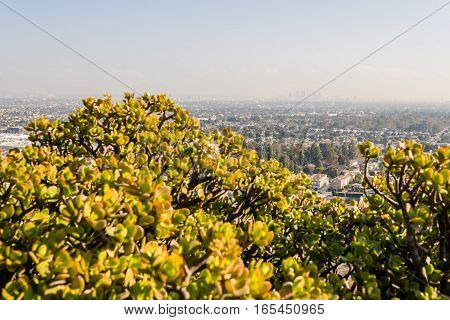 Los Angeles Cityscape W8A0354