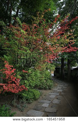 Some  beautiful autumn foliage in Matsumoto Japan