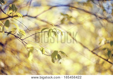 Spring branches of trees in the sunny day.
