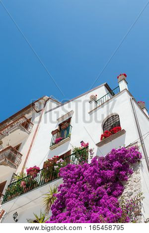 White building with bougainvillea in bloom in the old historical center of Sperlonga Lazio Italy.