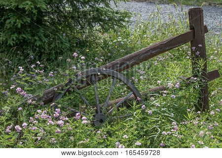 An old wooden wheel leaning against an old wooden gate overgrown by grass.