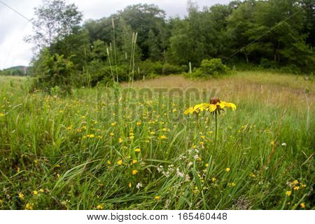 Flowers on a grassy field by the edge of a forest.