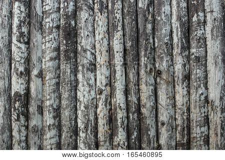 Old Wood Texture Tree Background tree bark