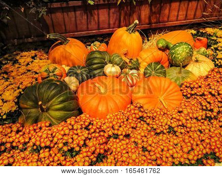 A group of different colored pumpkins with flowers