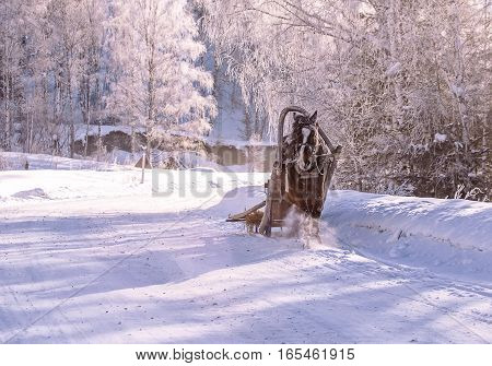 horse pulling a sledge in winter sunny day on a village