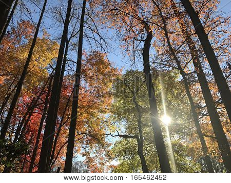 Colorful trees covering the autumn sky in Virginia.