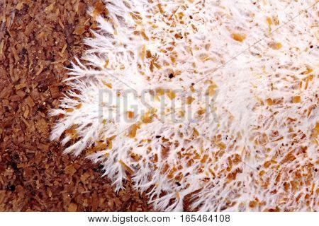 Art Of Infected Mushroom On Bag Of Bamboo Mushroom,texture