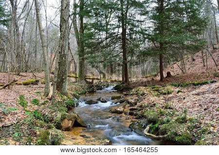 Small Stream Flowing Through The Allegheny Mountains